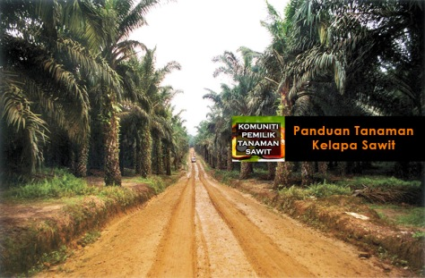 Palm oil plantation and road. © Myrthe Verweij/Milieudefensie. Media: ONE-TIME USE ONLY. PLEASE DELETE AFTER USE.